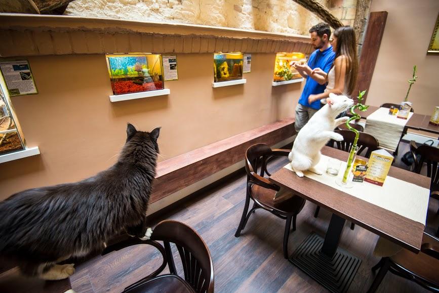 zoo cafe budapest