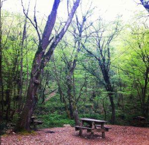 bahçeköy ormanları