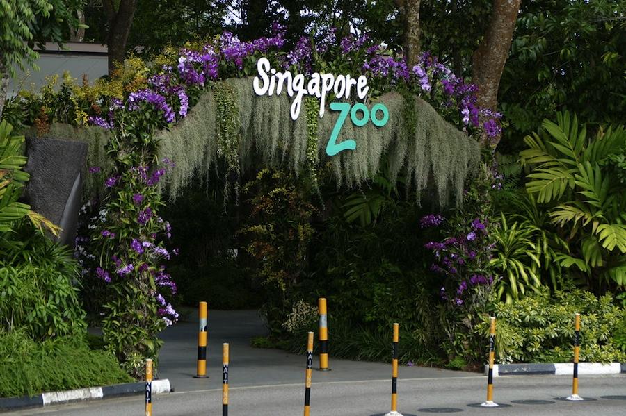 singapur-hayvanat-bahcesi
